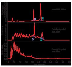 ゲノム編集のためのAgilent 2100 バイオアナライザFocused data