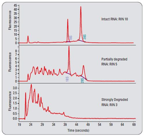 RNA Integrity Number (RIN) - R...